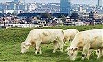 Agriculture urbaine à Bruxelles